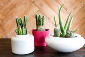 DIY Planters for Succulents